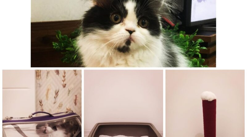Kedi Bakımı Masrafları, Kedi Beslemek İsteyenler İçin Kedi Ürünleri Maliyeti